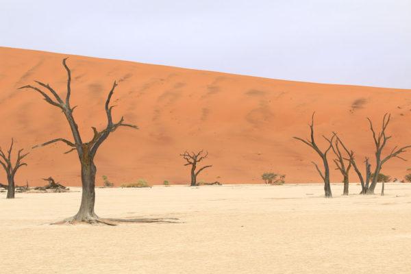 絶景!ナミブ砂漠、デッドフレイなどのナミビア定番観光スポット6選【海外観光情報】