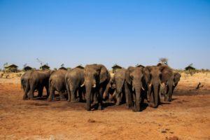 ゾウと一緒にキャンプが出来る世界でも類を見ないユニーク宿!エレファントサンズを紹介@ボツワナ【海外宿情報】