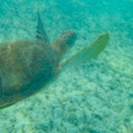 アクマルビーチでは野生のウミガメと一緒に泳げちゃう!@メキシコ【海外観光情報】